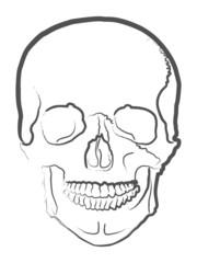 0424 Human Skull