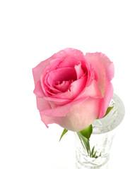 a pink rose in a flower vase