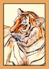 Watercolor painting of tiger
