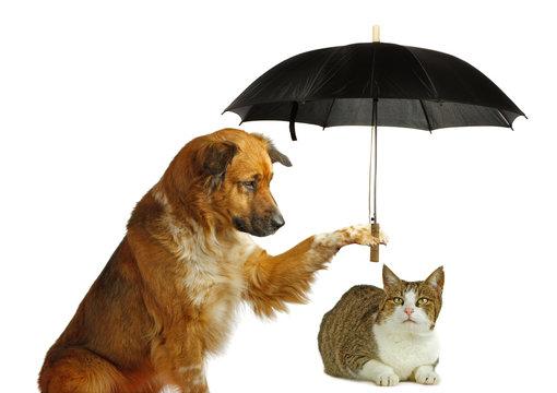 Hund beschützt Katze mit einem Regenschirm