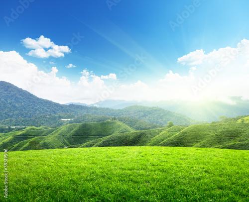 Зеленое поле возле горы  № 1077793 без смс