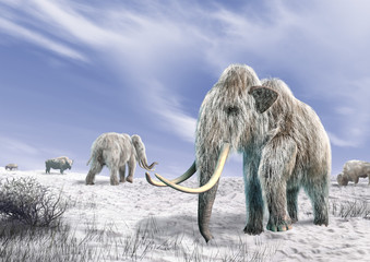 Two mammoth in a field covered of snow.