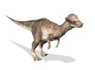 Photorealistic 3 D rendering of a Pachycephalosaurus.