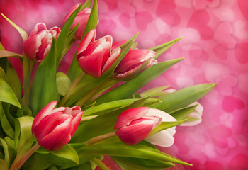 Pink tulips on background