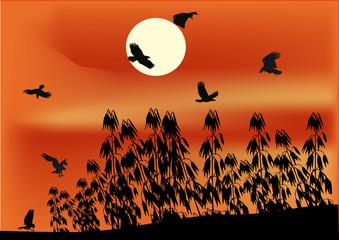Keuken foto achterwand Rood oat field and birds at sunset
