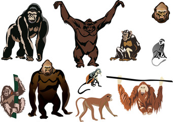 set of brown monkeys isolated on white