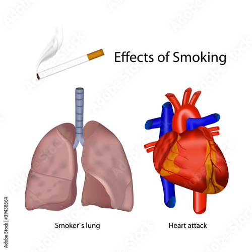 Effects Of Smoking On The Human Body