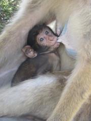 Türaufkleber Affe Vertederend