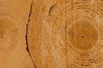 Frisches Holz