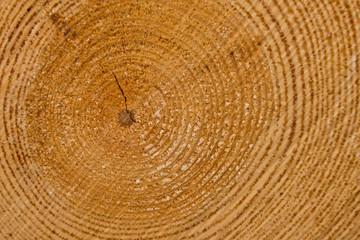 Jahresringe im Holz