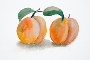 Watercolor illustration of Two peach