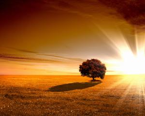 Rural landscape and shining sun