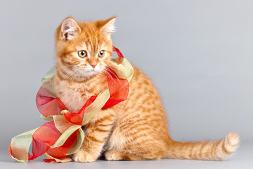 Red kitten with a ribbon on grey background