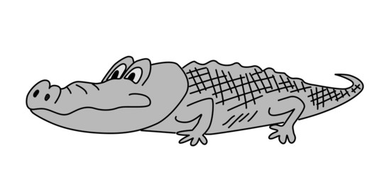 gray crocodile on white background