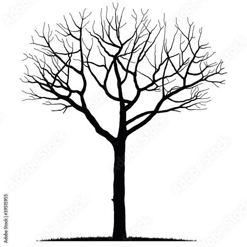 Albero immagini e vettoriali royalty free su for Albero ulivo vettoriale