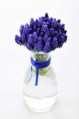 botanic, Hyacinthus botryoides L., Muscari, flowers, spring