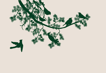 pine tree branch and birds