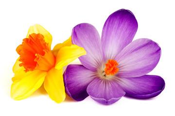 Poster Krokussen Blüte von Krokus und Narzisse