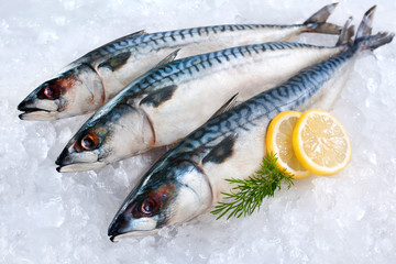 Mackerel fish on ice
