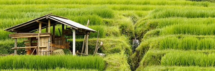 Bali, water management in rice field