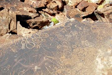 twyfelfontein peintures rupestres2