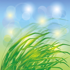 Spring background with fresh green grass