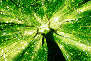 Aluminium Prints Green forest