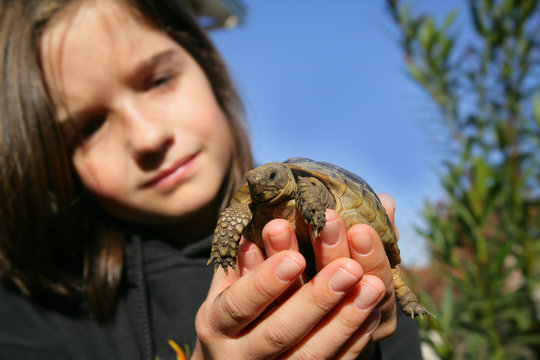 Young girl holding a turtle