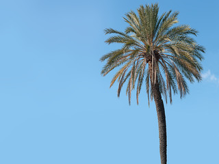 Palm tree with blue sky - generic tropical background