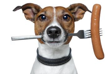 Obraz hungry dog with a sausage on the fork - fototapety do salonu
