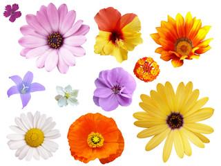 Blumen Set _01