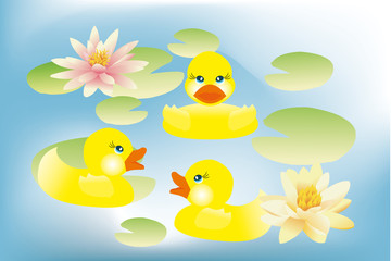 Ducklings swimming in lake with lotus flowers