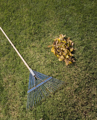 Rake and pile of leaves in grass