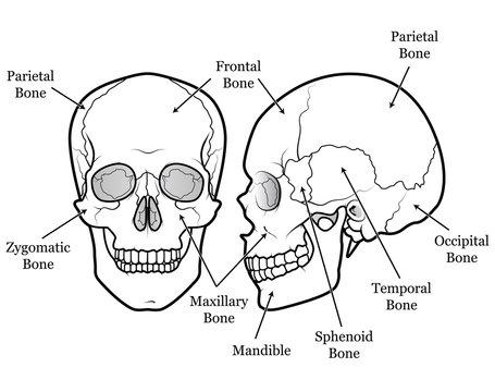 Skull Chart