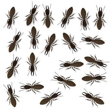 3d render of termite animals