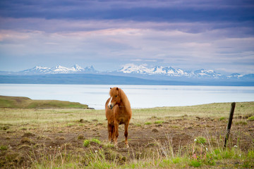 koń i góry