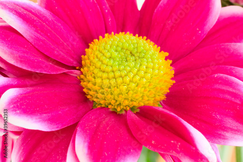 Pink flower with yellow center bright light stock photo and pink flower with yellow center bright light mightylinksfo Image collections
