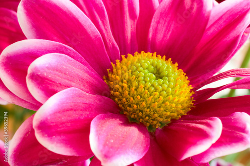 Pink Flower With Yellow Center Bright Light