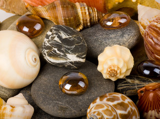 Beautiful exotic shell and stones