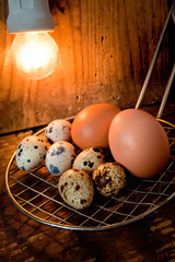 uova di quaglia e gallina con lampada