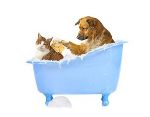 Katzenwäsche, Hund und Katze in der Badewanne