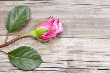 Rose mit Holzhintergrund