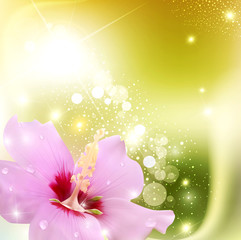 vector abstract background with a delicate flower and radiance