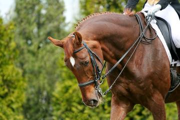 horse dressage