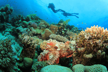 Coral Reef, Scorpionfish and Scuba Divers