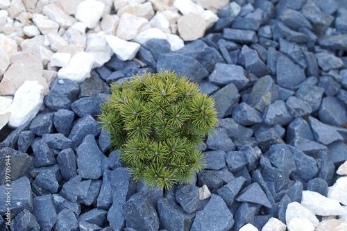 steine im vorgarten stockfotos und lizenzfreie bilder auf bild 39705944. Black Bedroom Furniture Sets. Home Design Ideas