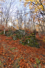 Tejera Negra beech forest