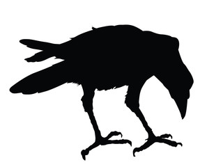 Raven detailed silhouette