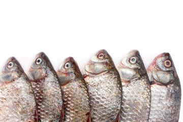 Fresh fishes isolated on white