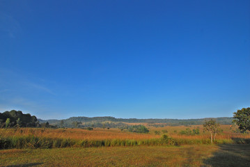 Landscape of blue sky and  grass